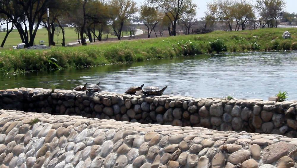 Mucha fauna silvestre acuática y terrestre se reúne en Las Aves y sus increíbles lagos temáticos