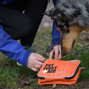pet first aid cover photo.jpg