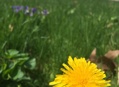 Wild Greens: Your Health, and the Plants in Your Yard