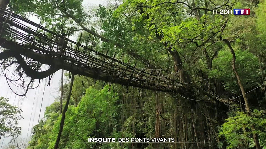 insolite-des-ponts-vivants-20190512-0050