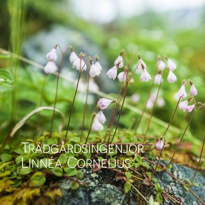 Linnéa Cornelius