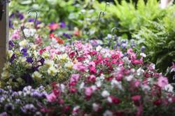 Carmar Gardens Inc