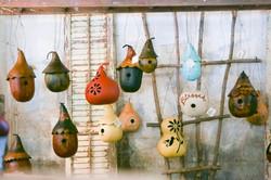 Brauen's Gourds