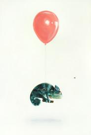chameleon High res.jpg