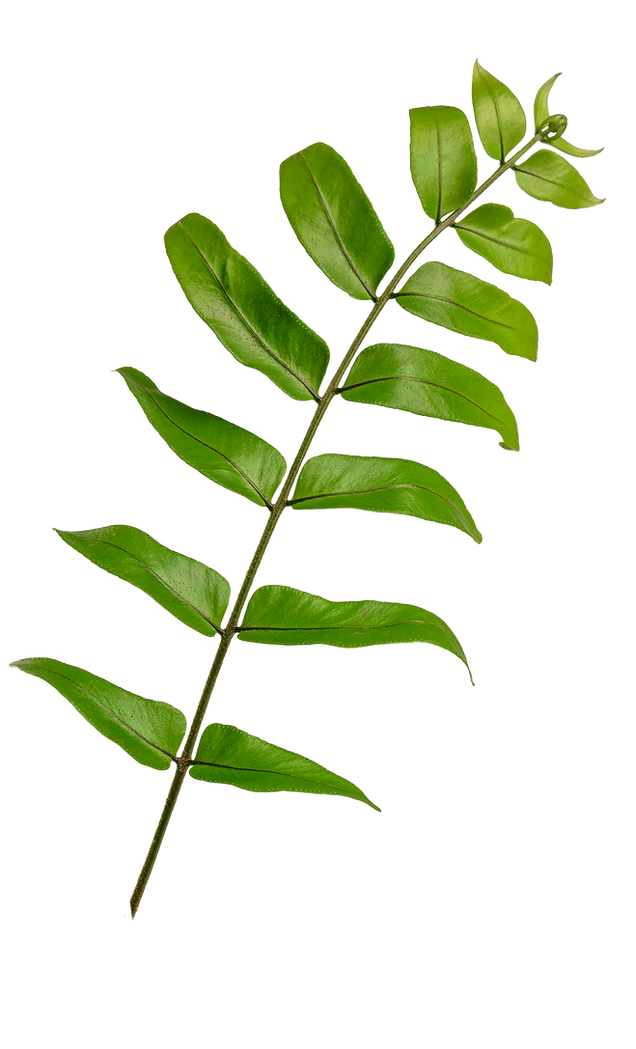 about-leaf.png