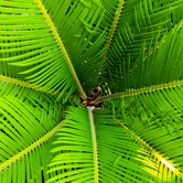 green palm.png