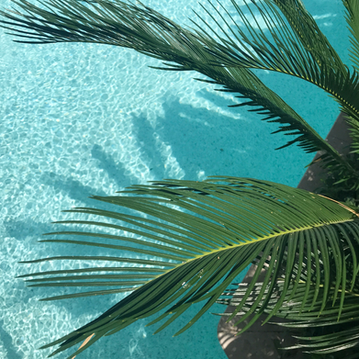 Palm over pool.png