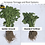 Thumbnail: Golden Ground Fertilizer