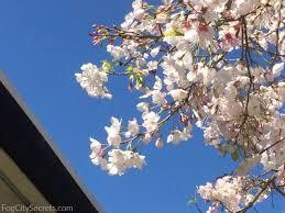 花粉の季節に手作りのヴェポラップ