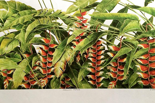 Heliconia & Ginger Flowers : 1.Helicornia Rostrata