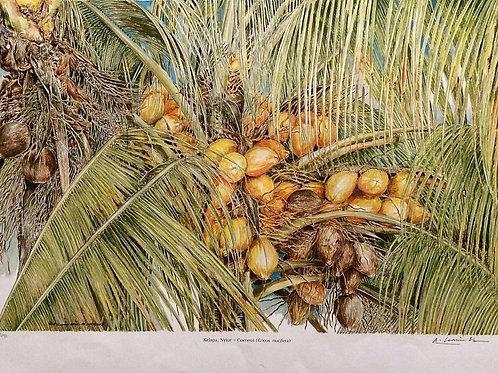 Palms Of Malaysia : 1.Coconut Palm, Cocos Nucifera.