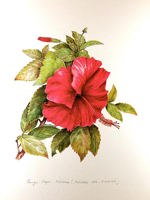 Red Flowers of Malaysia: 6. Hibiscus Rosa-Se Inensis, Hibiscus Flower