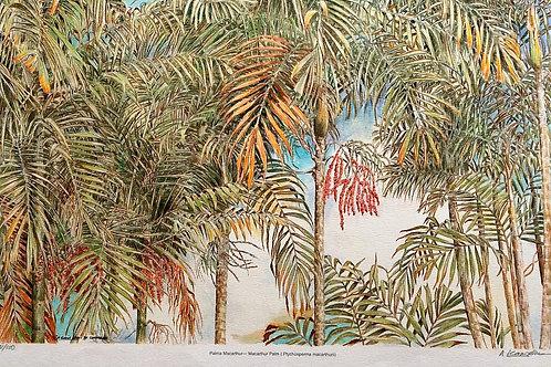Palms Of Malaysia : 2.Mac Arthur Palm, Ptychosperma Macarthurii