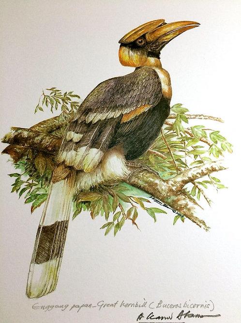 Birds of Malaysia: 1.Buceros Bicomis/ Greater Rhinoceros Hornbil / Enggang India