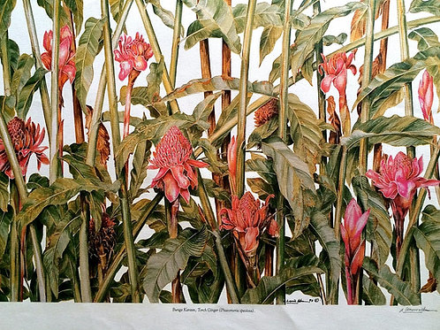 Heliconia & Ginger Flowers : 2.Phaeomeria Speciosa , Torch Ginger
