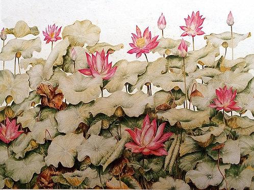 Full Flower Series : 3.Nelumbo nucifera , Sacred Lotus