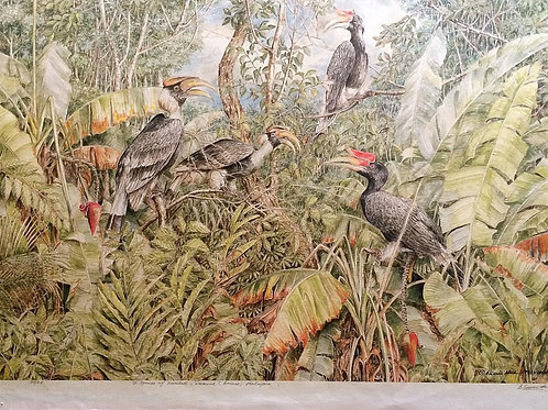 Long House & Hornbills : 2.Hornbills Flock