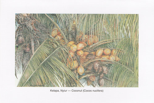 Postcards : Palms Of Malaysia
