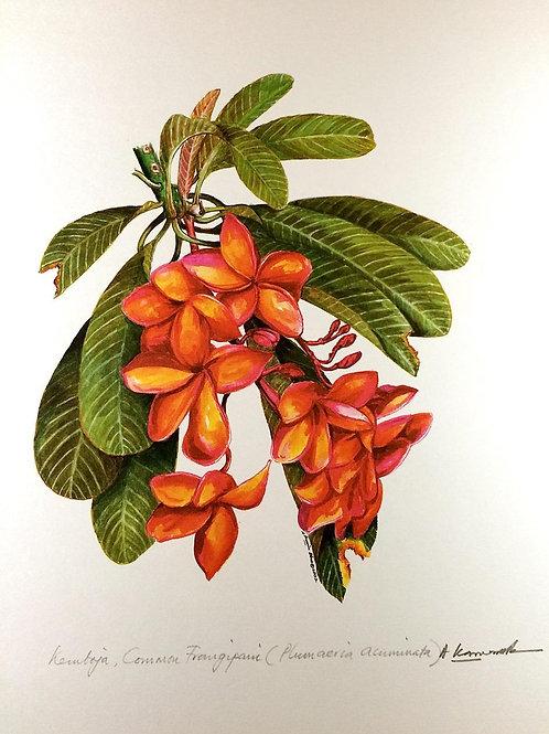 Red Flowers of Malaysia: 5.Plumeria Acuminata, Red Frangipani Flower