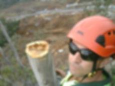 Tree Lopper Brisbane Company Arborist Se