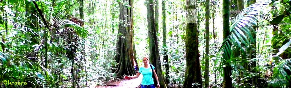 Ohroara Rainforest Walk