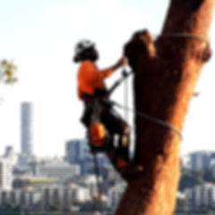 Tree Lopper Brisbane service climber lop