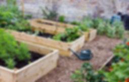 veggie garden3.jpg