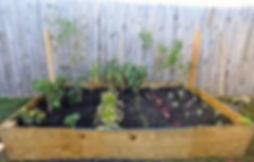 veggie garden10.jpg