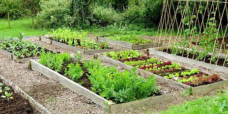 veggie garden2.jpg