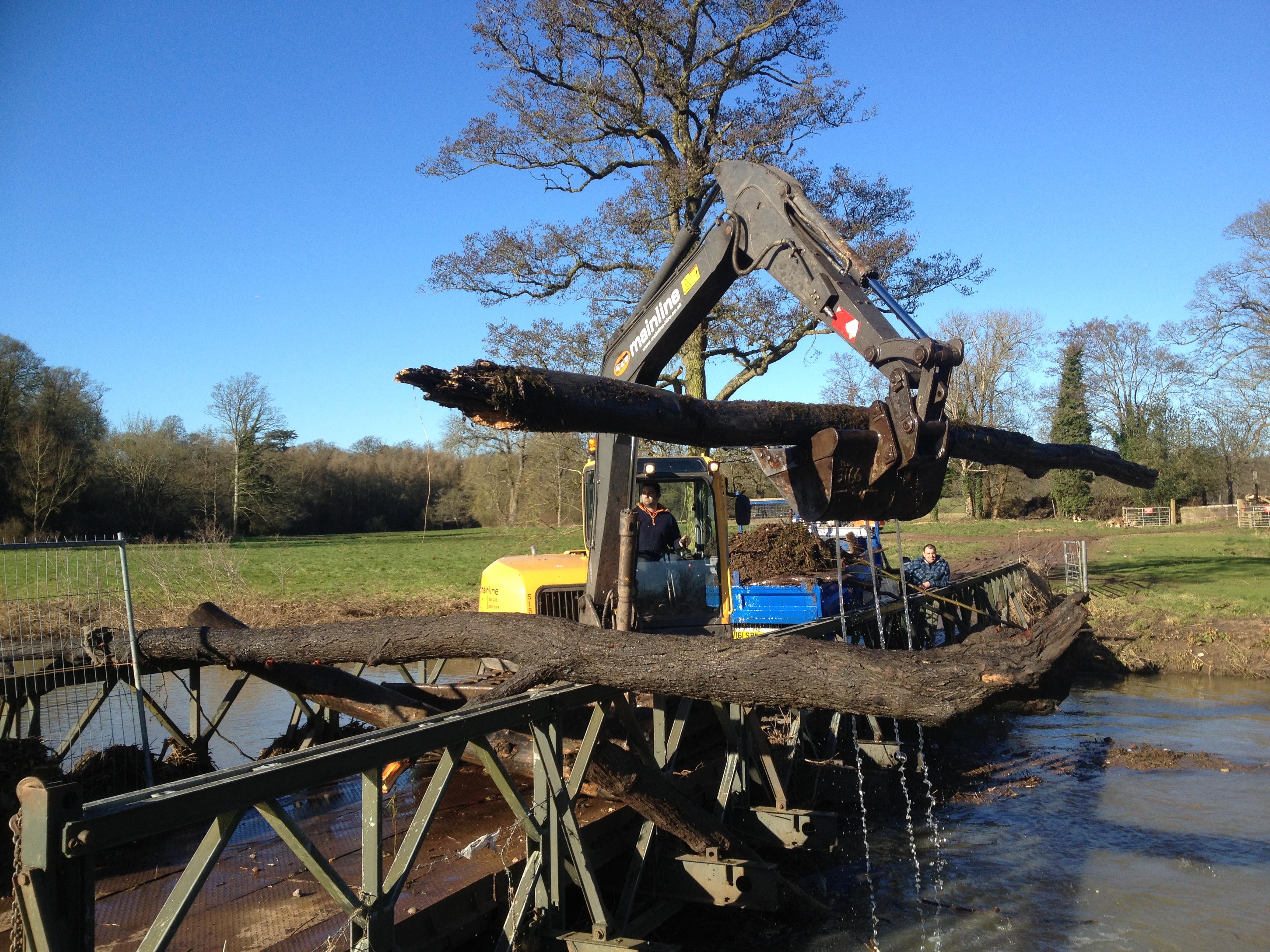 Fallen Tree Removal