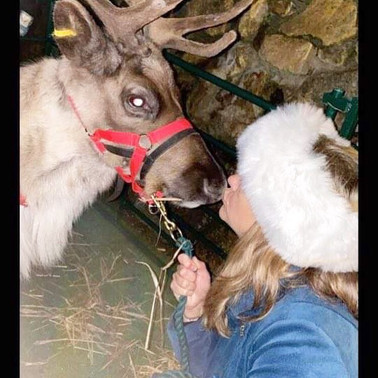Real Reindeer at The Christmas Market