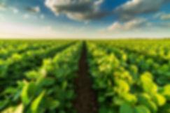 row-crops-row.jpg