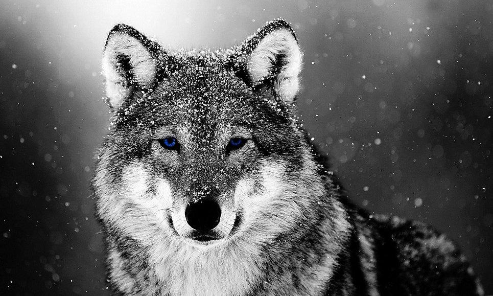 wold 3.jpg