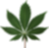 cannabis_PNG57.png