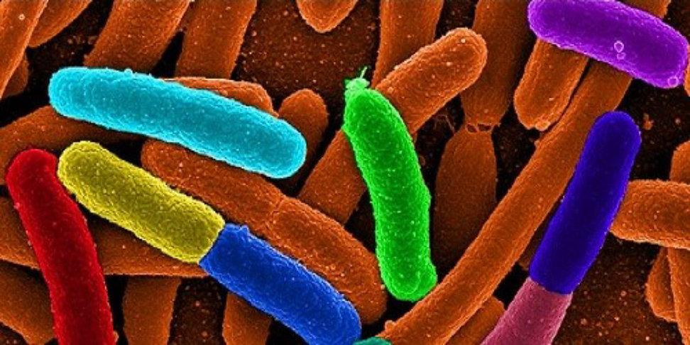 microbes 1.jpg