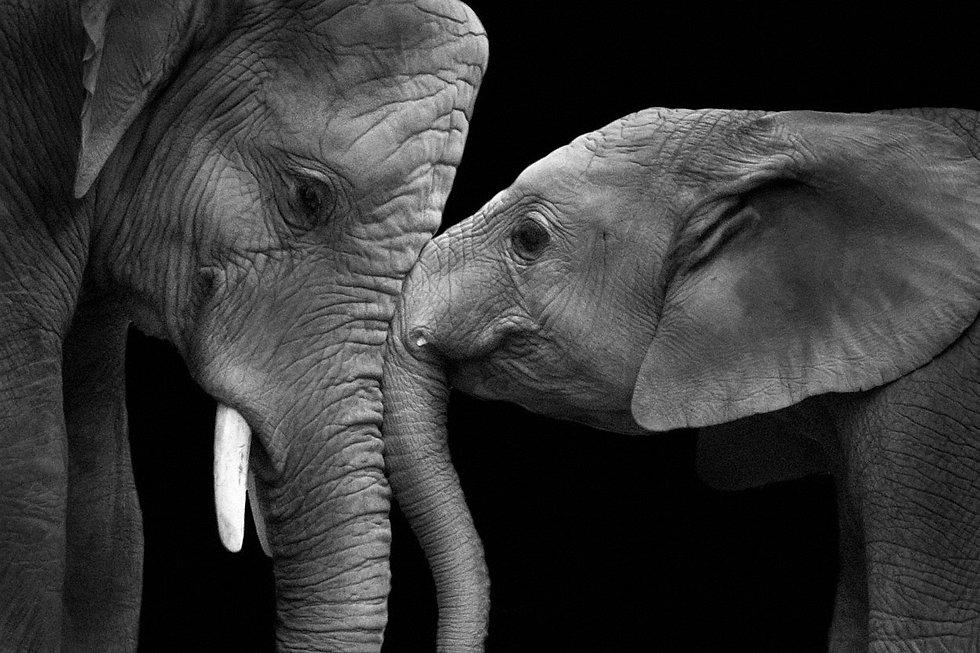 elephants talking.jpg
