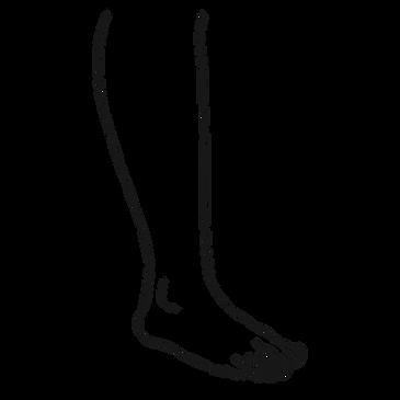 Lower Leg.png