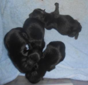 Dream-4-Pups.jpg