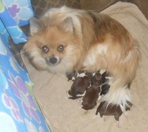 Dolly-w-5-pups-10-23-20.jpg