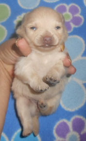 Blondie-F-Cream-Belly-5-21-21.jpg