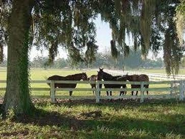 Horse 4.jpg