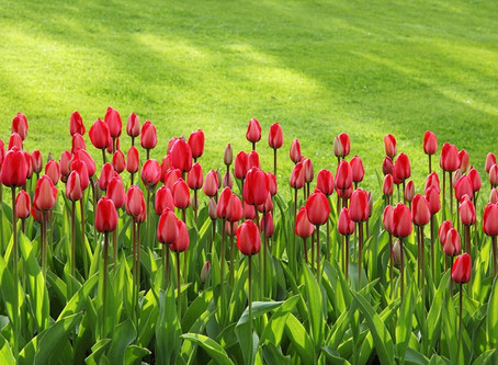 10 Tips For A Healthy Lawn