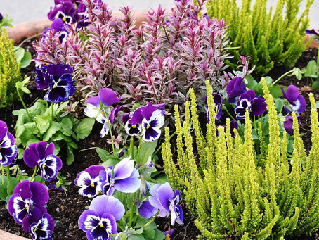 Four Top Gardening Tips