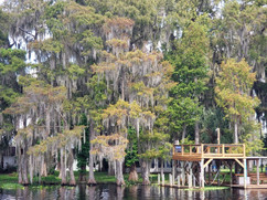 Cypress with Spanish moss.jpg