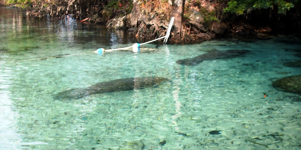 Manatee Snorkeling-1.31.21