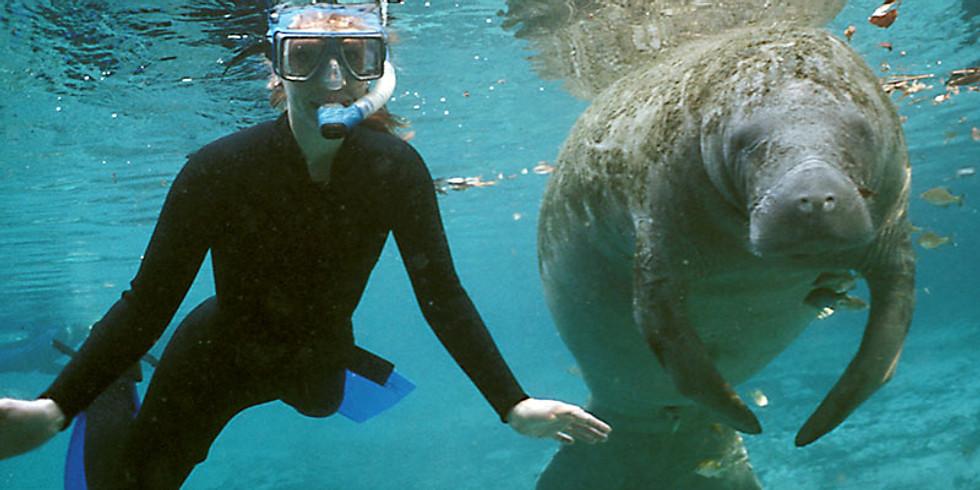 Manatee Snorkeling Trip 3/23/19