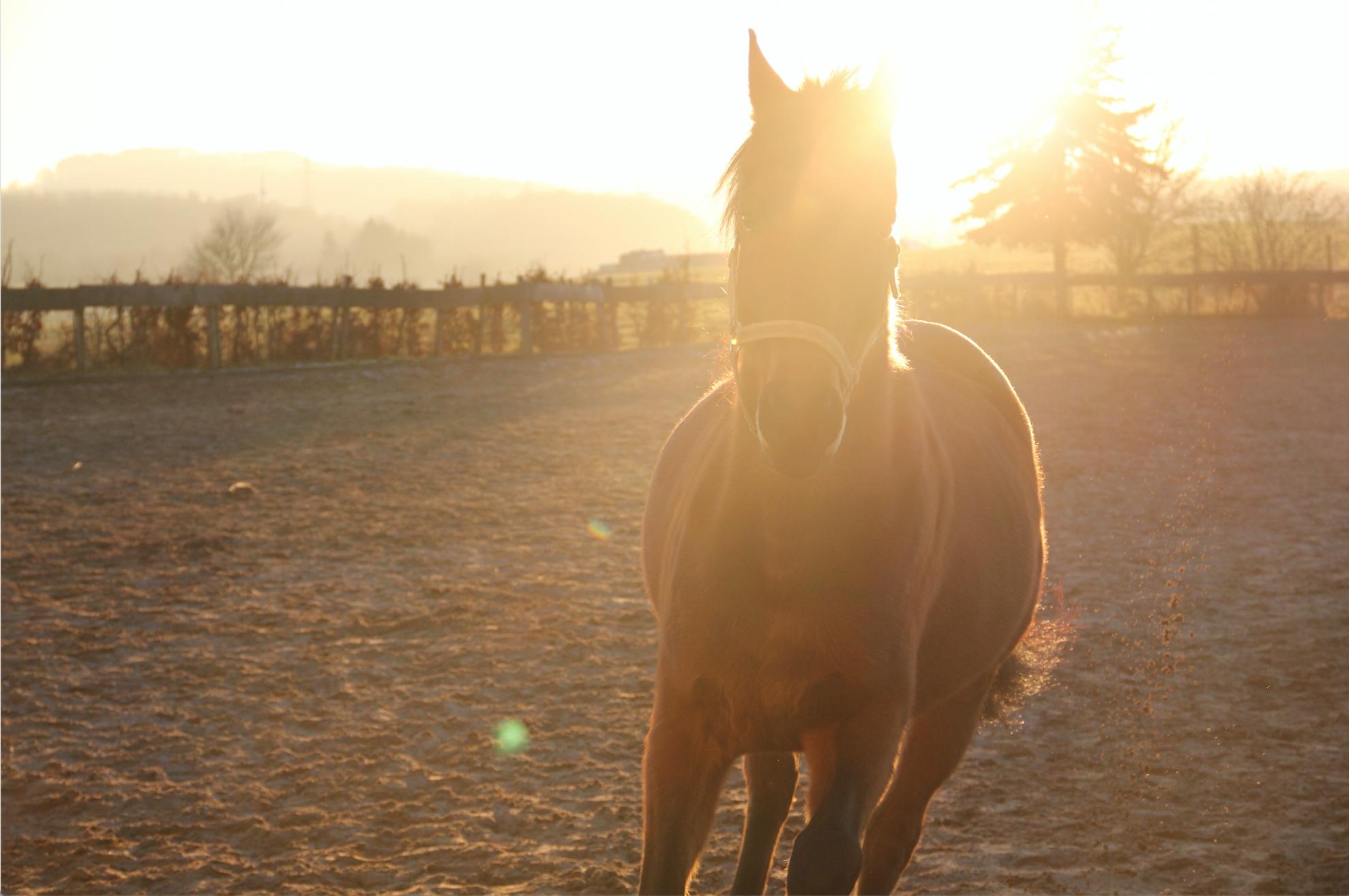 Horse Behaviour Consultations