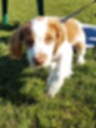 puppy 4.jpeg