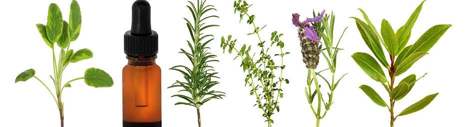 Florais de BAch2.jpg