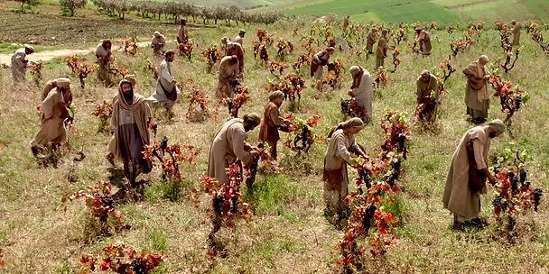 workers_in_vineyard_pic01.jpg